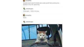Tumblr Posts - Episode 4