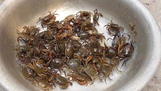 Vietnam street food - Cooking 100 Crabs for 4 People Family Dinner Meal in Vietnam