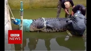 Huge pet crocodile kills keeper - BBC News
