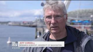 Seattle's new seawall built to make life easier for fish