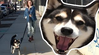 I Let My Dog Walk Me For A Day