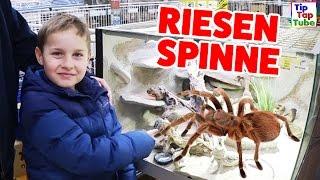 RIESEN SPINNE für Ash? Wird das sein neues Haustier? Vlog TipTapTube