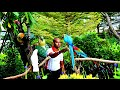 Colorful Parrots from Amazon Jungle of B...mp3