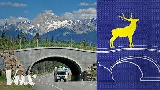Wildlife crossings stop roadkill. Why aren