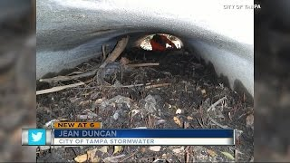 Divers remove trash from Tampa storm water pipes