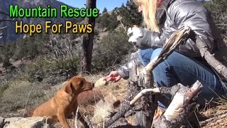 Hope For Paws: mountain rescue of three scared dogs - Ginger, Sage & Emma.  Please share.