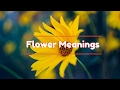 Flower Meanings: The Meaning of Differen...mp3