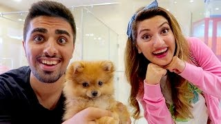 WE ARE GETTING A PET !!!