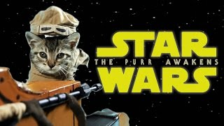 Star Wars: The Purr Awakens