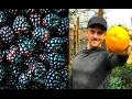 AMAZING FARMERS MARKET - Delicious Vegan...mp3