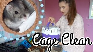 Hamster Cage Clean & Evening Pet Jobs