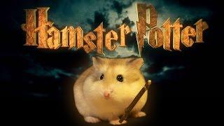 Hamster Potter -