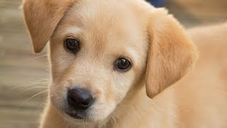 7 Adorable Puppy Facts