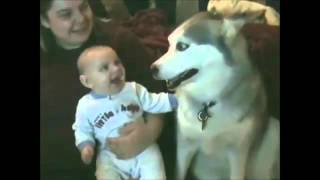 Babies Laughing at Dogs