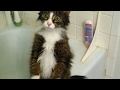 Funny reasons why YOU SHOULD HAVE A CAT ...mp3