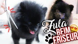 Mit ZULA beim Friseur ✂️😍 ( Pomeranian ) | Dagi Bee