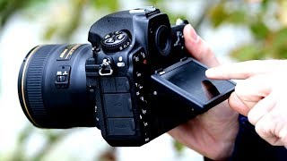 A Nikon D850 Review for Nature Photographers - Cabstone Technology