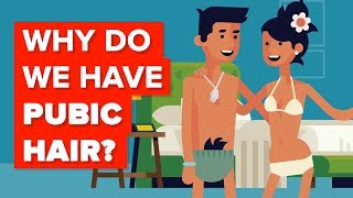 Why Do We Have Pubic Hair?