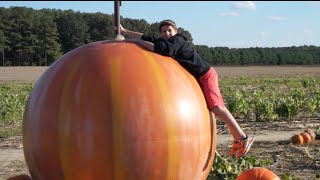 Pumpkin Climbing | Fall Field Trip With Dad | Flippin