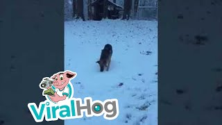 First Snow Experience  || ViralHog