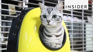 10 Products Every Cat Lover Needs