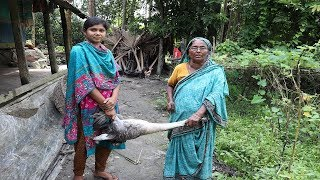 Village Food   Cooking 7 Kg of Goose   Village Style Country Goose Cooking In My Village Spicy Testy