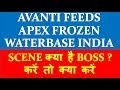 Avanti Feeds Apex Frozen Waterbase why i...mp3