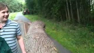 Audi zieht 7 Meter langen Baumstamm