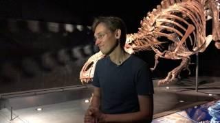 Paläontologe erklärt das Besondere am T-Rex-Skelett