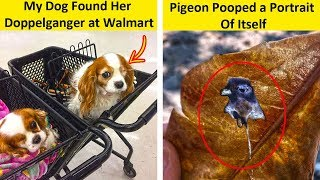 Incredible Coincidences You