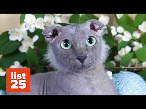 5a836126bd Title  19 Awesome Cats That Cost a Fortune