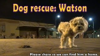 Dog rescue: Watson, the three legged dog - Please share and help us find him a home.
