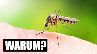 Wieso Mücken manche Menschen stechen und andere nicht!