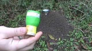 Anthill Destroyed with artillery shell (sparkling) - Blow it up!!!