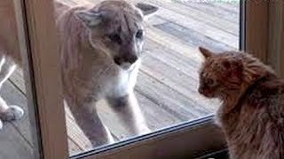 GET READY for ULTRA LAUGHING - Super FUNNY & HILARIOUS ANIMAL videos