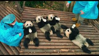 PANDAS - Mission :30 (Now Playing)