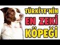 Türkiye'nin En Zeki Köpeği Max - ...mp3