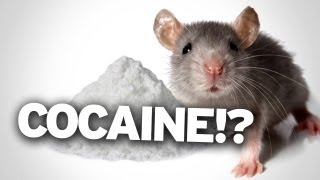 Cocaine Re-Wires Your Brain, After One Use