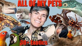 MEET ALL OF MY PETS! (Over 30 Exotic Animals) 2018 | Tyler Rugge