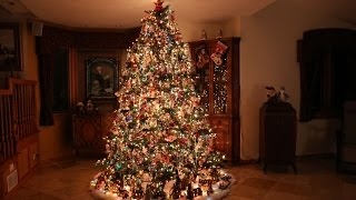 Building the Most Beautiful Christmas Tree (Time Lapse)