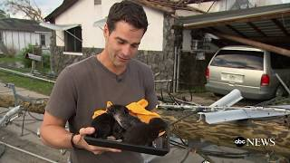 Falling kittens rescued from Hurricane Michael