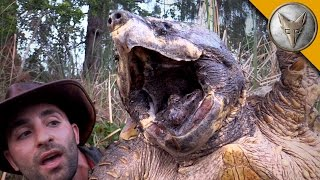 The BIGGEST Turtle You