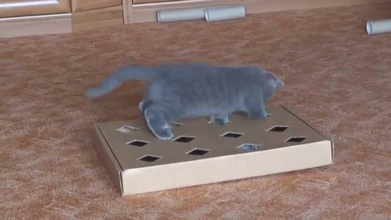 Как сделать игрушки для котов своими руками видео