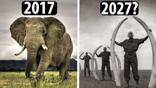 DIESE Tierarten könnten bald AUSGESTORBEN sein!