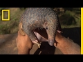The Tragic Tale of a Pangolin, the World...mp3