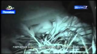 Dua Dunia - Manusia Ular Eps.1 [Full Video] 12 Juni 2013
