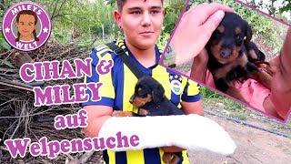 CIHAN UND MILEY AUF WELPENSUCHE - Junge Hundewelpen entlaufen | Mileys Welt