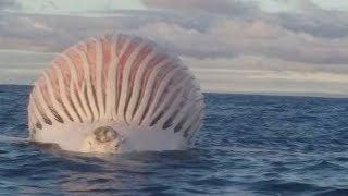 STRANGEST Things Found In The Ocean!