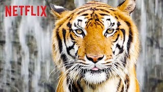 Best of Netflix Nature Docs   Happy Earth Day 🌎