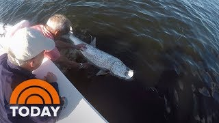 Severe Red Tide Killing Sea Life Off Florida's Coast   TODAY
